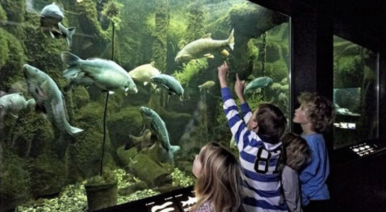 Aruba offers an immersive mobile experience in the heart of AQUATIS, Europe's largest freshwater aquarium-vivarium